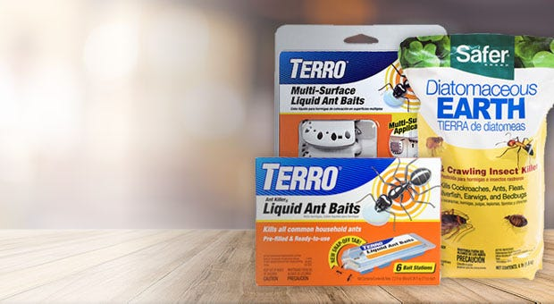 Terro and Safer Ant Control Products
