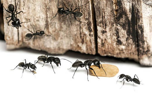 How to Find an Ant Nest