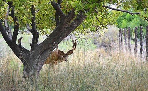 Solutions to Keep Deer off a Property