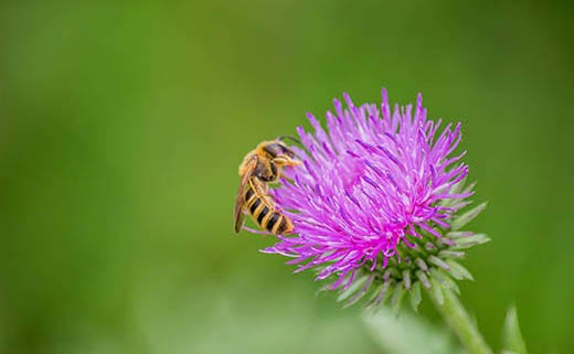 How to Grow a Bee-Friendly Garden