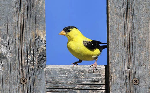 Resident Birds: Birds That Don't Migrate