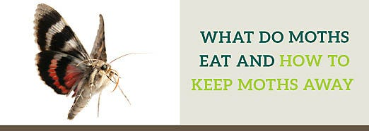 What do Moths Eat and How to Keep Moths Away