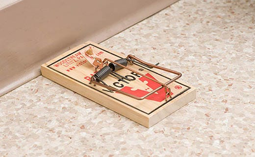 7 Common Mouse Trap Mistakes