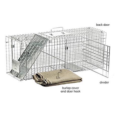 Cat-Specific Accessories