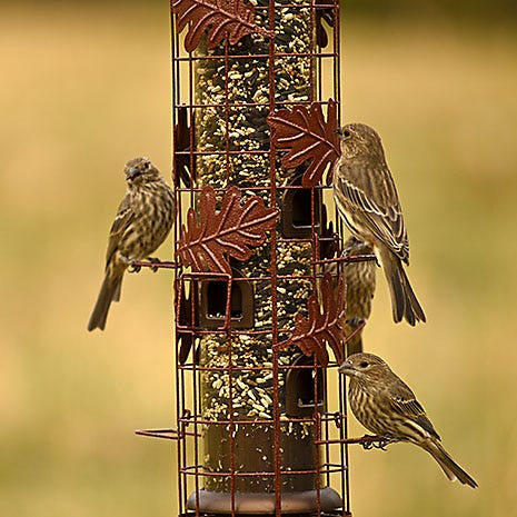 Accommodates Multiple Birds