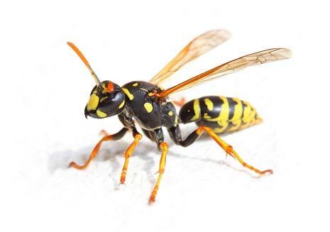 Year-Round Yellow Jacket Control